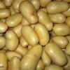Patates Diyeti
