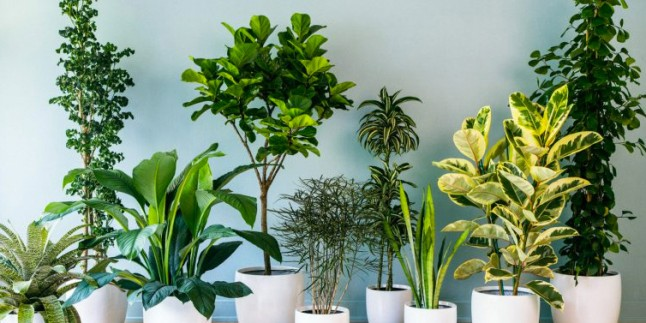 Evinize çok yakışacak bitkiler! Evin havasını değişsin!
