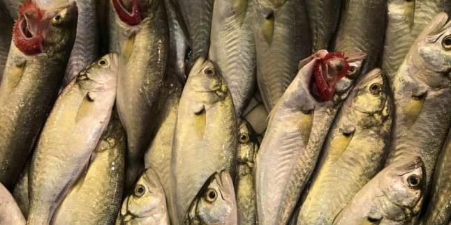 B12 kaynağı: Lüfer balığının faydaları nelerdir? Lüfer balığı nasıl tüketilir?