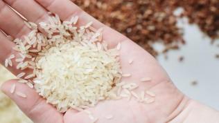 Baldo pirinç nedir? Baldo pirinç özellikleri nelerdir? 2021 baldo pirinç fiyatları